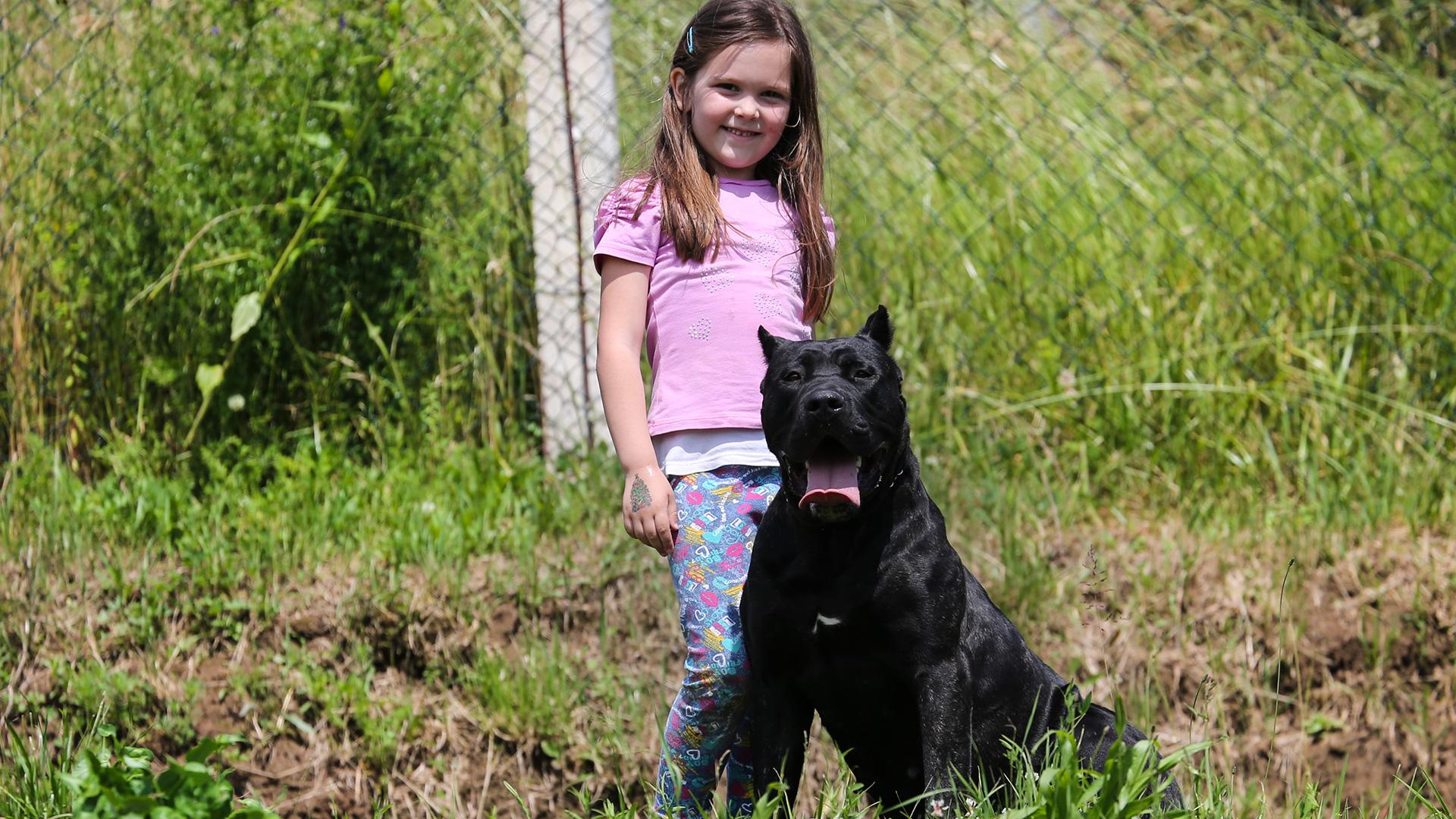 Dogo Canario - Kira vom Wuerfelhof